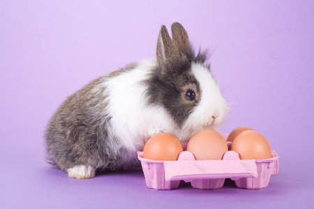 spotted bunny with some eggs isolated on purple background photo