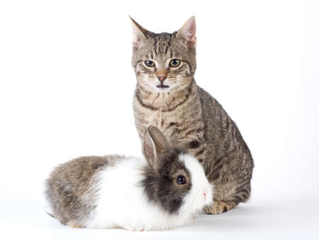 bunny and kitten, isolated on white