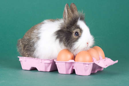 spotted bunny with eggs isolated on green background photo