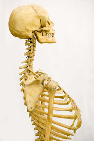 remains: human skeleton Stock Photo