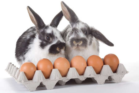 two bunny with eggs, isolated on white photo