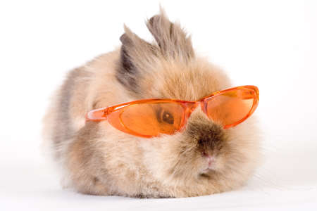 brown bunny with sunglasses, isolated on white  photo