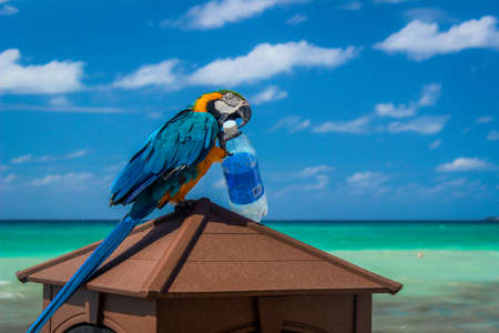 Vibrant, Photo of a Parrot Playing with a Bottle on the Beach - with Blue and Yellow Feathers, Perched Atop a Brown Box, and Aqua Ocean Water in the Background in the Caribbean on a Bright, Sunny Day Banco de Imagens