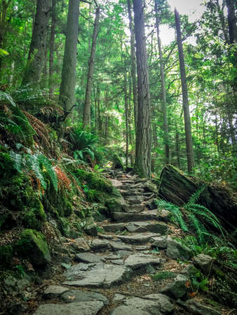 Green Pacific Northwest Rocky Hiking Trail - with Narrow Steps Winding Up the Path and Tall Trees in the Background on a Sunny Summer Day Banco de Imagens