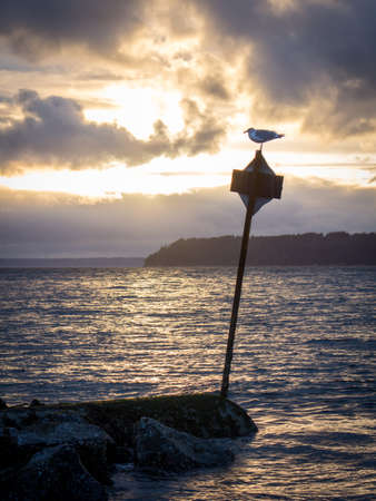 Seagull on a Crooked Sign by the Ocean at Sunset - with Glowing Rays of Sunlight Behind the Clouds in the Pacific Northwest on a Winter Evening