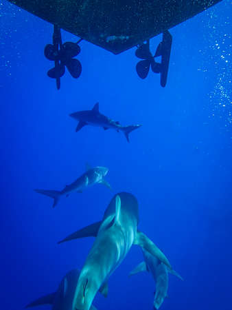 Underwater Photo of a School of Sharks Swimming Under a Boat - in a Dark Blue Ocean, with Rays of Light Shining Down from Above off the Coast of Honolulu, Hawaii Banco de Imagens