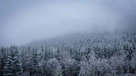 Hillside of Evergreen Trees on a Cold, Snowy Day in the Pacific Northwest