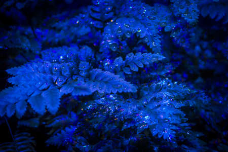 Close Up Macro Photo of Wet Leaves in Blue Light - with Droplets on the Ridges in a Dark Nursery