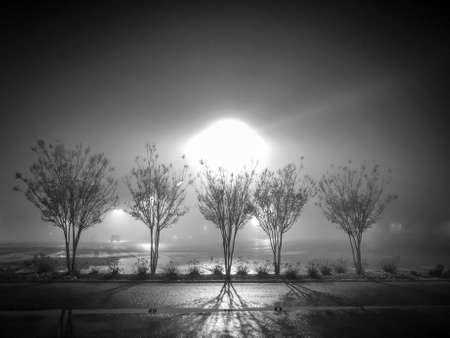 Shadowy, Black & White Photo of a Row of Trees in a Parking Lot on a Foggy Night, with a Bright Light Post Shining in the Background