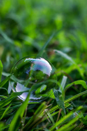 Vibrant, Close Up Photo of a Bubble Resting Gently on Green Blades of Grass on a Summer Day Banco de Imagens
