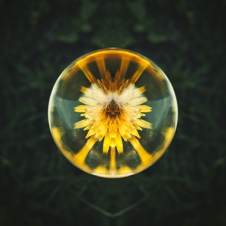 Beautiful crystall ball with flower inside mirrored Stock Photo