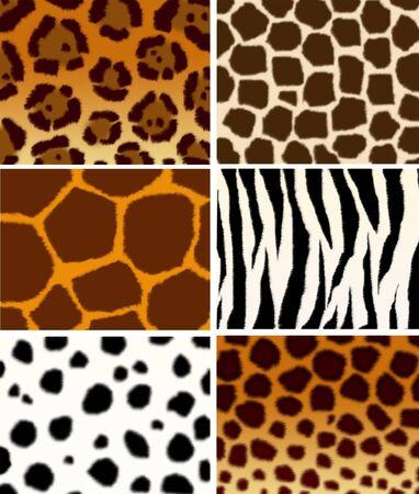 ungulate: Set - animals skins  textures  Stock Photo