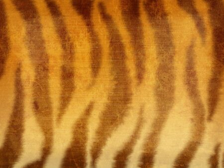 Grunge background - striped fur of a tiger photo
