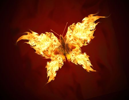 Flying butterfly with fiery wings photo
