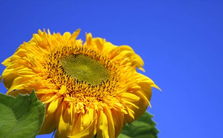 Yellow flower on a background of the blue sky photo