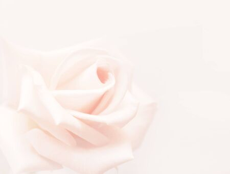 softness: Vintage softness rose - blurred image