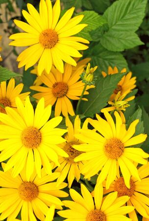 Bright yellow flowers vertical photo stock photo picture and bright yellow flowers vertical photo stock photo picture and royalty free image image 5815417 mightylinksfo