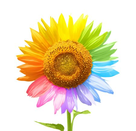 saturation: Petals of a sunflower painted in different colors Stock Photo