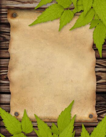 Grunge background with paper sheet and green leaves photo