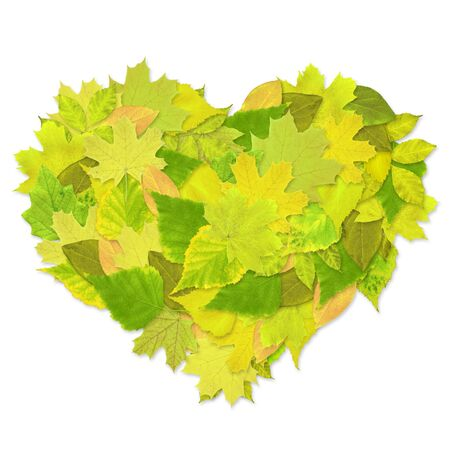 Heart from green leaves - over white Stock Photo - 6383832