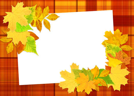 Background - paper sheet and autumn leafs photo