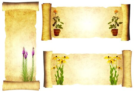 Vintage scrolls with flowers - isolated over white photo