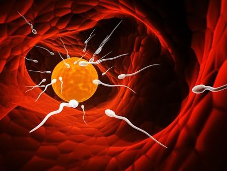 nudo maschile: Spermatozoons, galleggianti di ovulo - 3d rendering