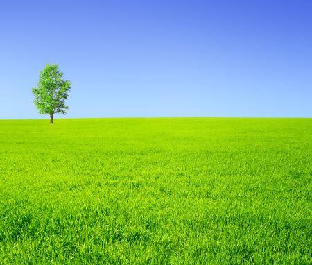 rolling landscape: Summer landscape - lonely tree on a green meadow