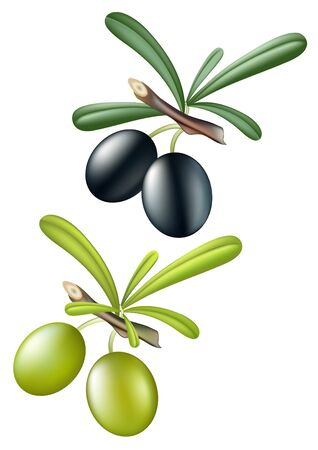 Collection of vector olives. Isolated over white Illustration