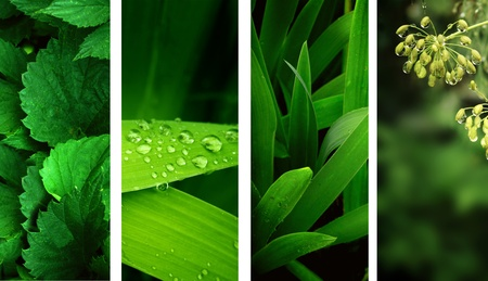 Collection of nature banners. Rain drops on a green leafs photo