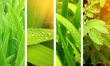 Collection of nature banners. Rain drops on a green leafs Stock Photo - 9589347