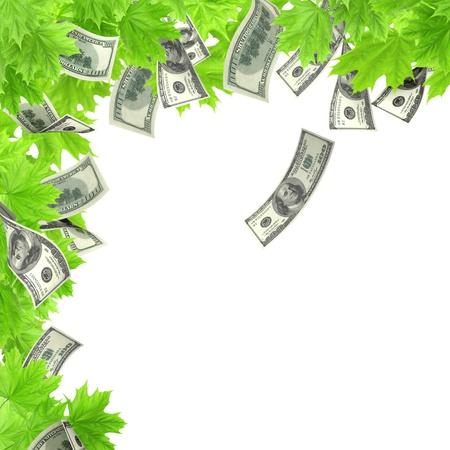 bankroll: Money tree. Isolated over white
