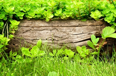 olden: Summer background with old wooden plank, grass and green leaves