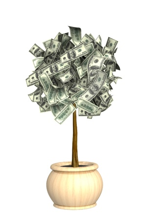 abundance money: Money tree. Isolated over white
