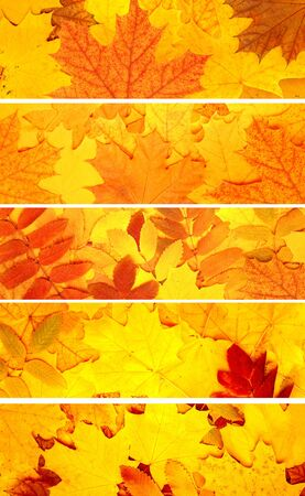 multi coloured: Collection of banners with autumn leaves Stock Photo
