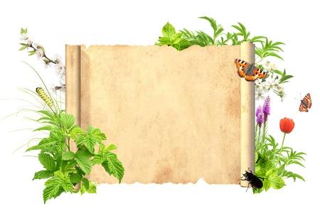 pergamino: Mensaje de la naturaleza. Aislado m�s de blanco
