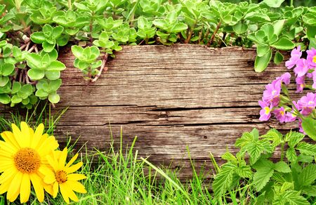 Summer background with old wooden plank, flower, grass and green leaves photo