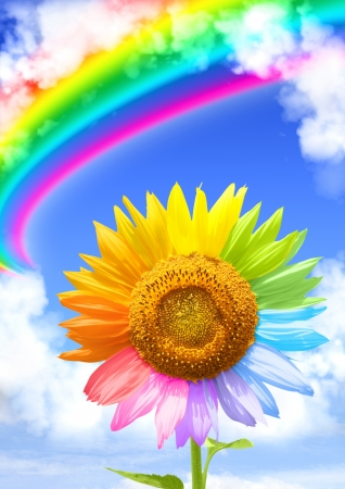 Sunflower, rainbow and frame from white clouds photo