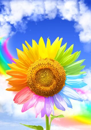 clean air: Sunflower, rainbow and frame from white clouds