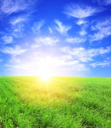 Beautiful summer landscape. A green field, blue sky photo