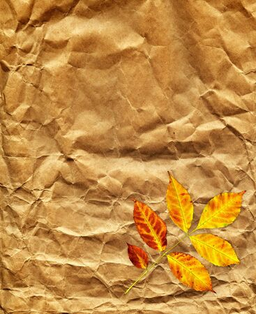 soiled: Old paper texture and autumn leaf Stock Photo