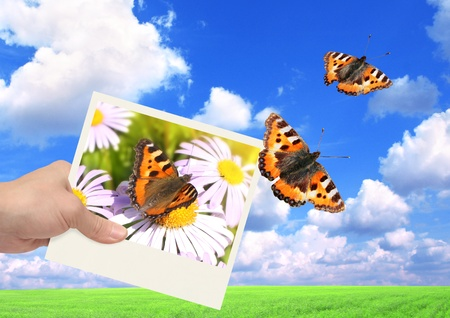 Hand with photo and butterfly. On background of the summer landscape photo