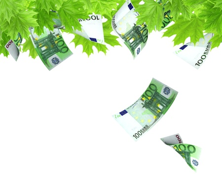 miracle leaf: Money tree. Isolated over white
