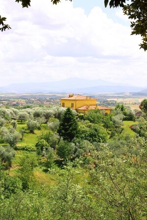 Typical Italian landscape with olive trees Stock Photo - 16455556