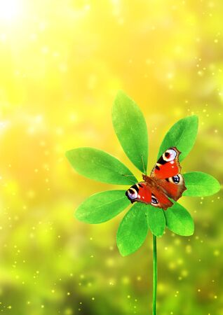 Summer background with green leaf and butterfly Stock Photo - 16550223