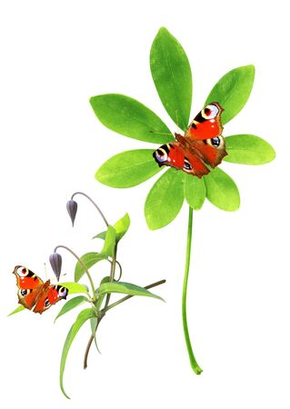 Set of green leaves and butterfly. Isolated over white Stock Photo - 16550222