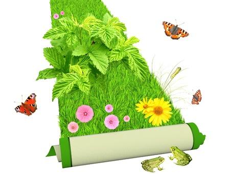 recursos naturales: Alfombra de hierba verde brillante y flores. Aislado en blanco