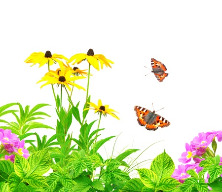 Summer flowers, green leaves and butterfly. Isolated over white Stock Photo - 18540761