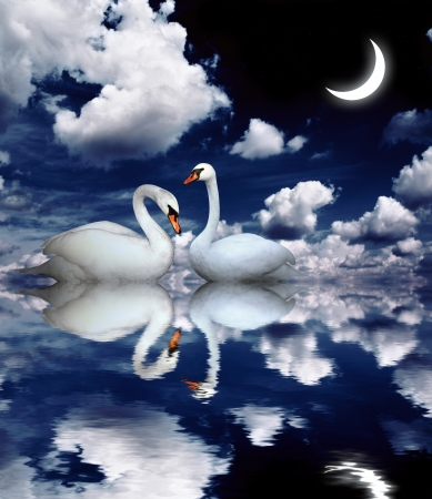 crescent: Two white swans on black background