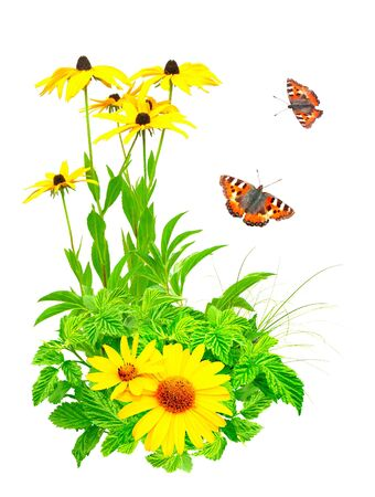 Summer flowers, green leaves and butterfly. Isolated over white Stock Photo - 19261960